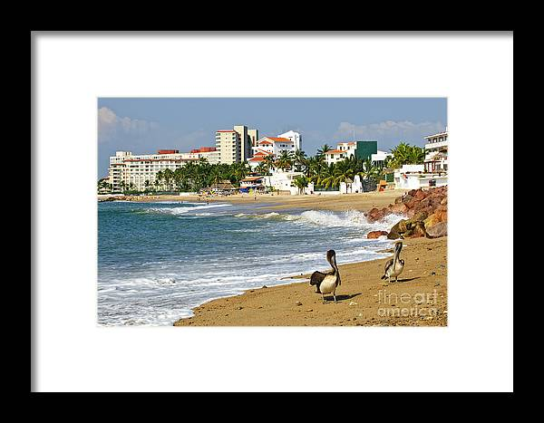 Pelicans Framed Print featuring the photograph Pelicans On Beach In Mexico by Elena Elisseeva