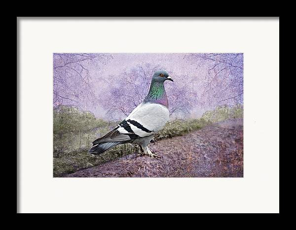 Pigeon Framed Print featuring the photograph Pigeon In The Park by Bonnie Barry
