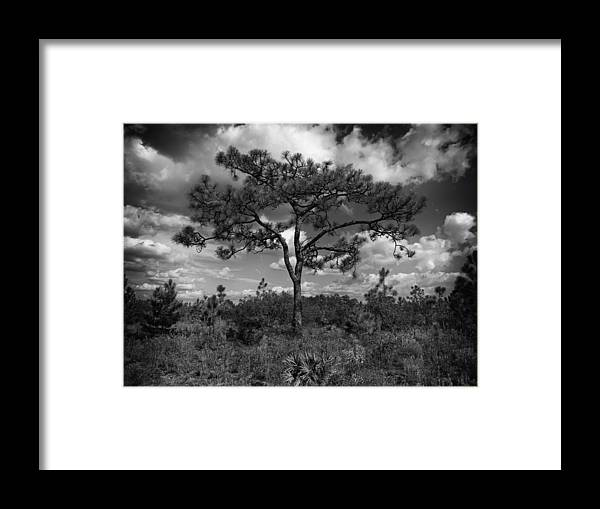 Leaves Framed Print featuring the photograph Pine by Al Hurley
