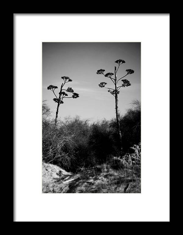 Jezcself Framed Print featuring the photograph Plant Crossing by Jez C Self