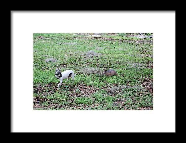 Framed Print featuring the photograph Play Time by Katrina Johns
