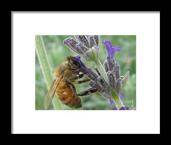 Flower Framed Print featuring the photograph Pollen Catcher by Tina Marie