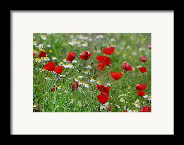 Poppy Framed Print featuring the photograph Poppies by Guido Montanes Castillo