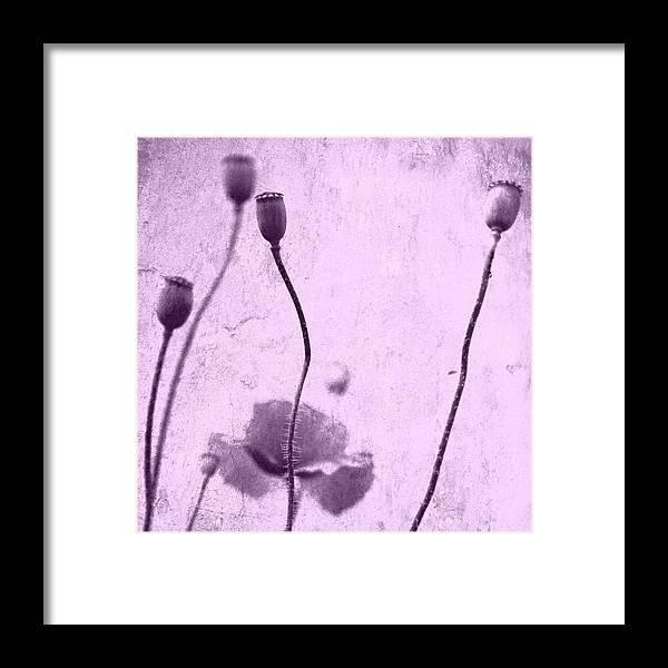Mohn Framed Print featuring the photograph Poppy Art Image by Falko Follert
