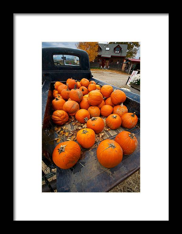Apple Picking Framed Print featuring the photograph Pumpkins In The Back by Mike Horvath