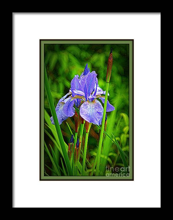 Flowers Framed Print featuring the photograph Purple Orchids by Dawn Harris