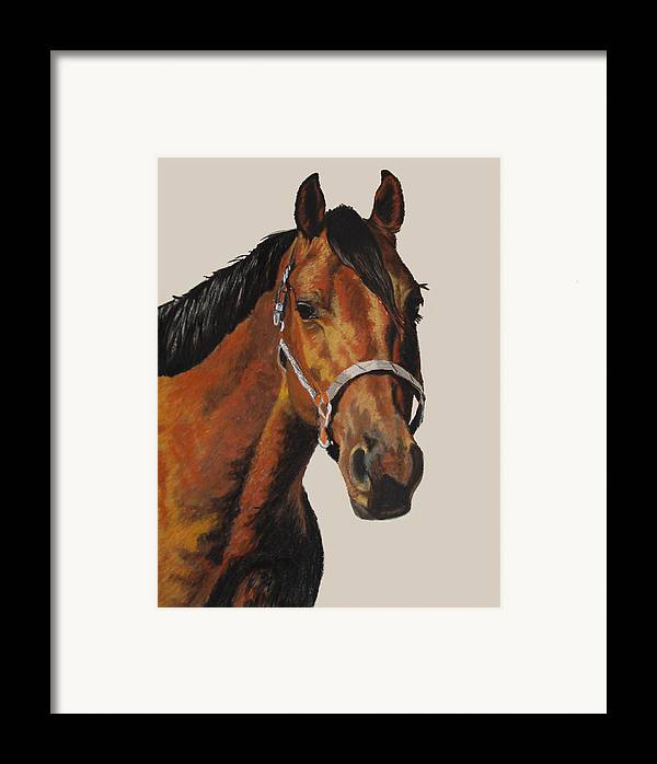American Quarter Horse Framed Print featuring the pastel Quarter Horse by Ann Marie Chaffin