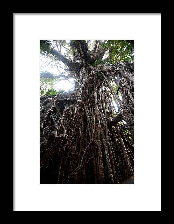 Tree Framed Print featuring the photograph Rainforest Tree by Carole Hinding