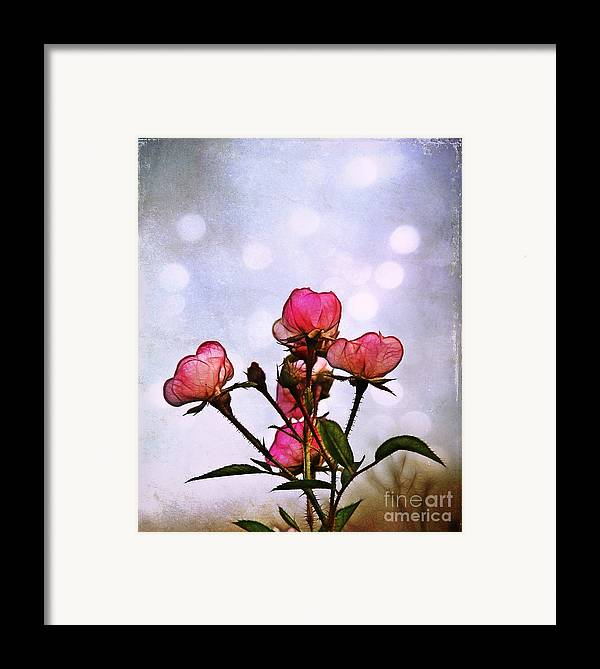 Rose Framed Print featuring the photograph Reaching For The Light by Judi Bagwell