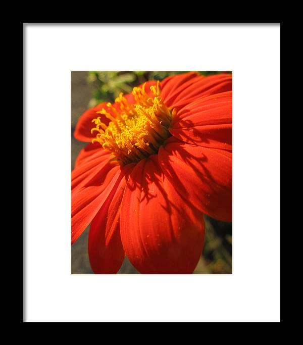 Flowers Framed Print featuring the photograph Red Flower by Michele Caporaso