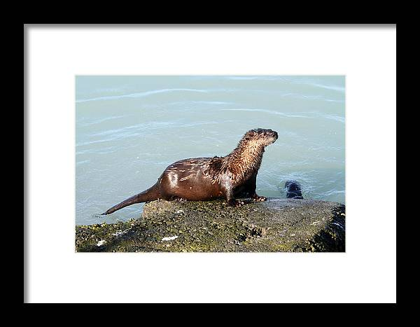 Doug Lloyd Framed Print featuring the photograph River Otter by Doug Lloyd