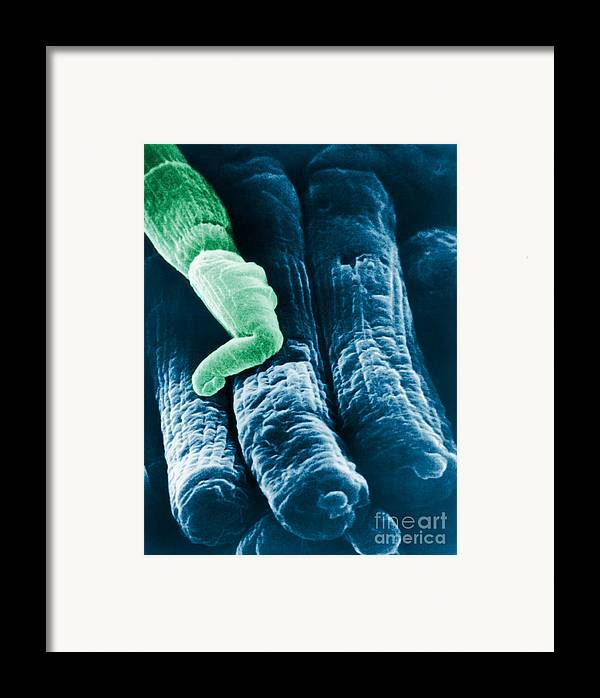 Sem Framed Print featuring the photograph Rods And Cones by Omikron