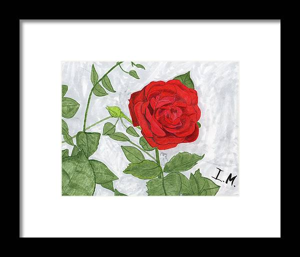 Rose Framed Print featuring the drawing Rose by Isaac Mullens
