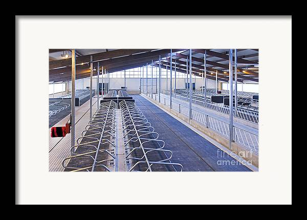 Agricultural Framed Print featuring the photograph Row Of Cattle Cubicles by Jaak Nilson