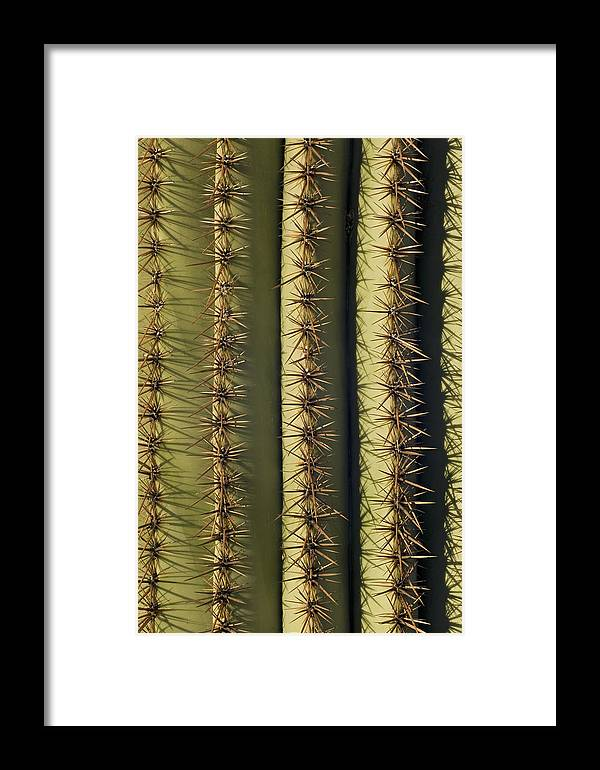 Mp Framed Print featuring the photograph Saguaro Carnegiea Gigantea Cactus by Ingo Arndt