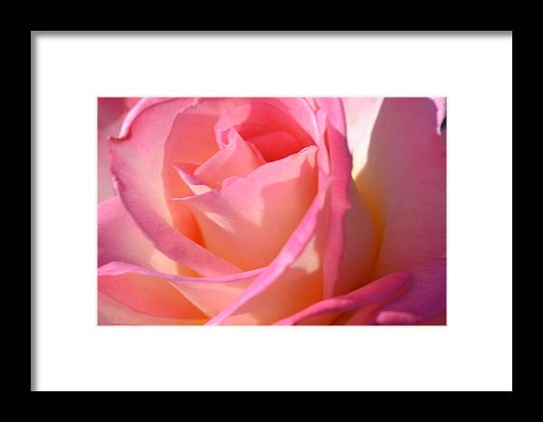Colors Framed Print featuring the photograph Soft Rose by Saifon Anaya