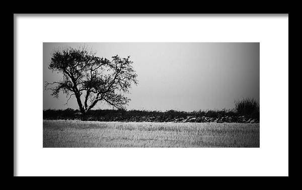 Jerry Cordeiro Framed Prints Photographs Framed Print featuring the photograph Solitude by The Artist Project