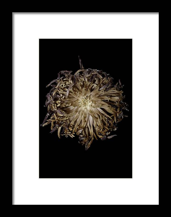Flower Framed Print featuring the photograph Spiky Flower by Nathaniel Kolby