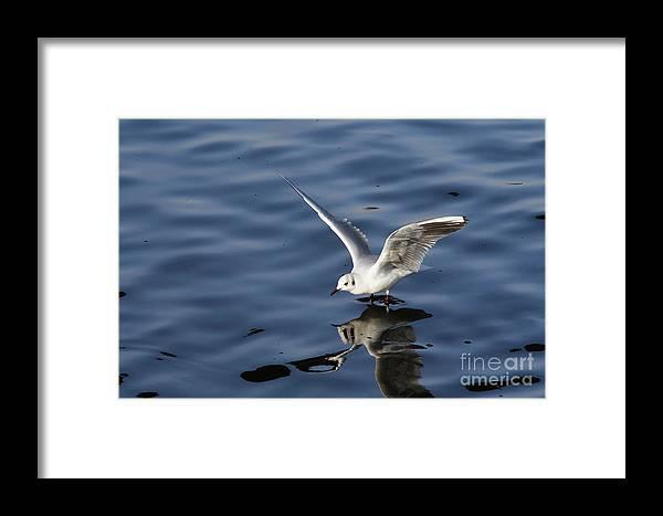 Animal Framed Print featuring the photograph Splashdown by Michal Boubin