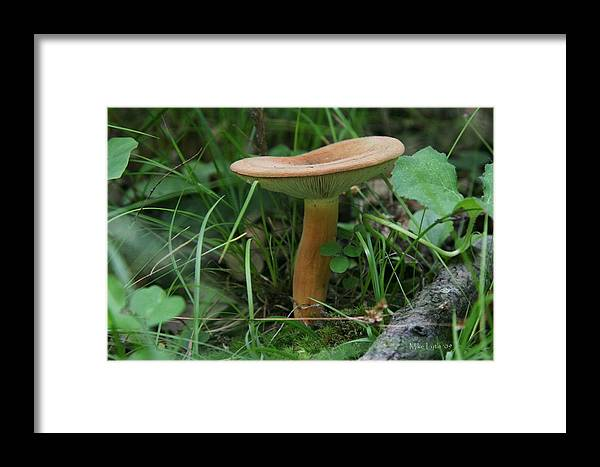 Mushroom Framed Print featuring the photograph Spring Mushroom by Mike Lytle