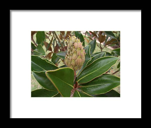 Flower Framed Print featuring the photograph Strangely Beautiful by Rani De Leeuw