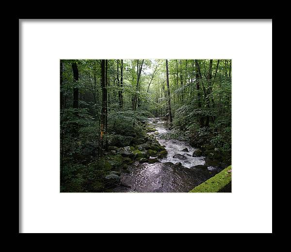 Landscape Framed Print featuring the photograph Stream by Megan Cohen