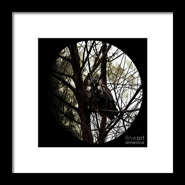 Animal Framed Print featuring the photograph The Night Owl And Harvest Moon by Wingsdomain Art and Photography