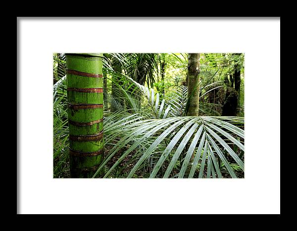 Environment Framed Print featuring the photograph Tropical Jungle by Les Cunliffe
