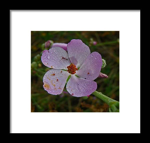 Flowers Framed Print featuring the photograph Untitled by Daniele Smith