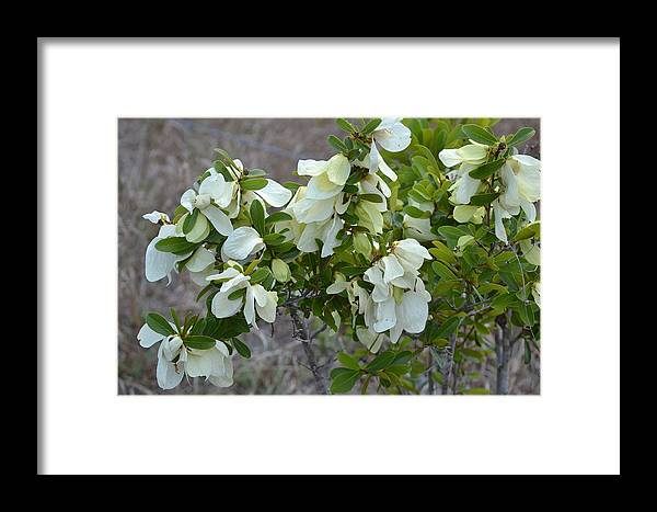 Framed Print featuring the photograph White Wild Flowers by Katrina Johns