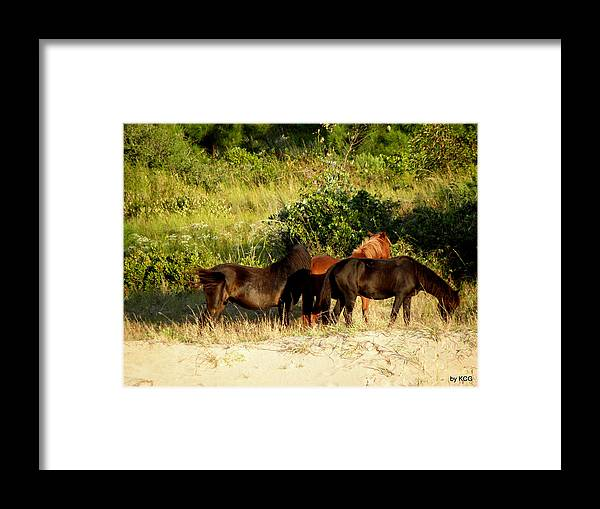 Wild Framed Print featuring the photograph Wild And Free by Kim Galluzzo Wozniak