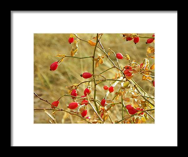 Autumn Framed Print featuring the photograph Winter Berries by Vicky Mowrer