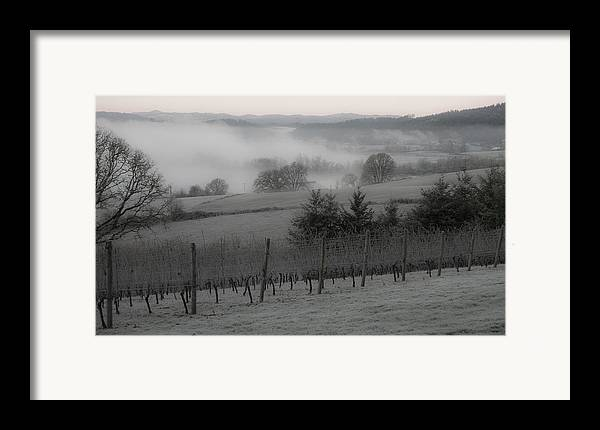 Vineyard Framed Print featuring the photograph Winter Vineyard by Jean Noren