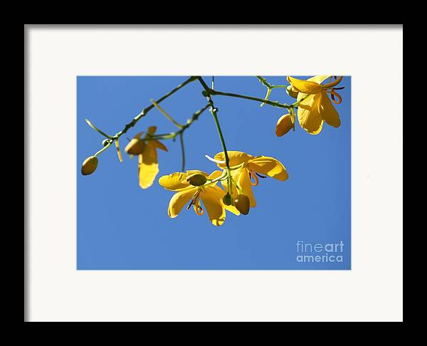 Cassia Framed Print featuring the photograph Yellow And Blue by Theresa Willingham