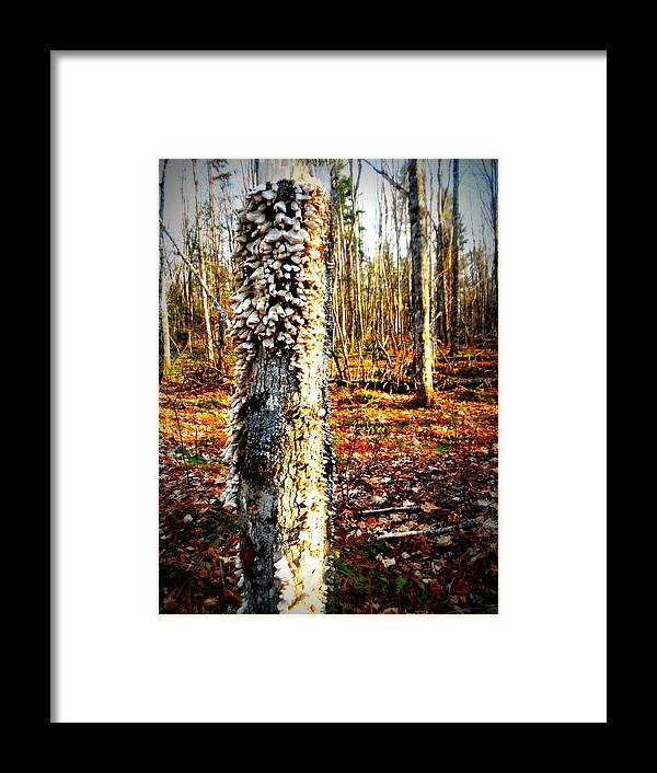 Tree Framed Print featuring the photograph . by Erika Betts