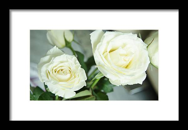 Framed Print featuring the photograph Rose For You by Gornganogphatchara Kalapun
