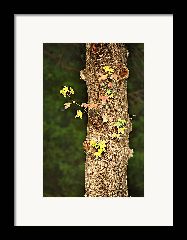 Autumn Framed Print featuring the photograph 1209-0859 September Tease by Randy Forrester