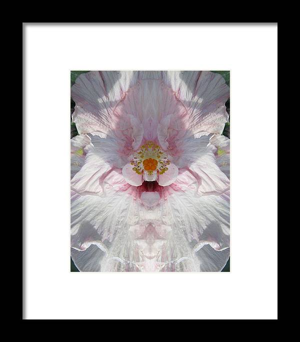 Flowers Framed Print featuring the photograph Hibiscus Mystery by Michele Caporaso