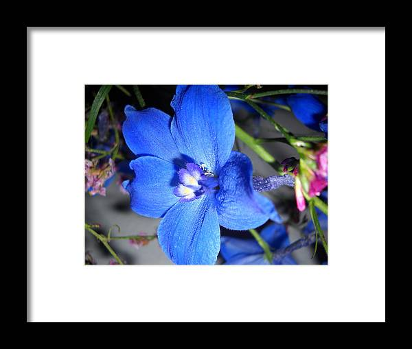 Framed Print featuring the photograph No Name by Irina Zelichenko