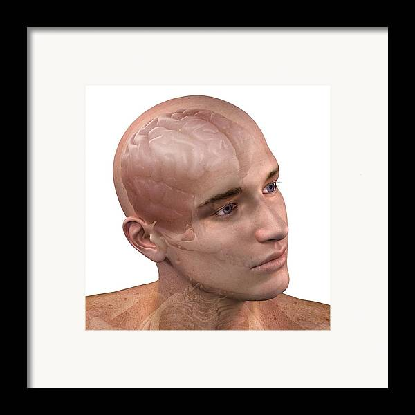 Artwork Framed Print featuring the photograph Head Anatomy, Artwork by Sciepro