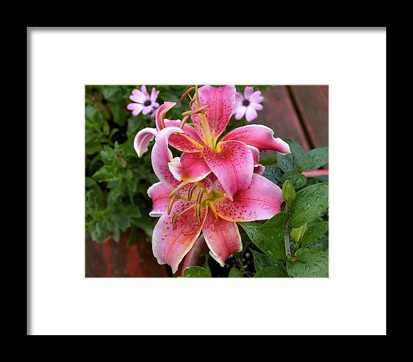 Flower Framed Print featuring the photograph Leveille Collection by Sandra Israelson