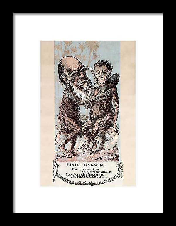 Ancestor Framed Print featuring the photograph 1874 Monkey Darwin Cartoon By Faustin by Paul D Stewart