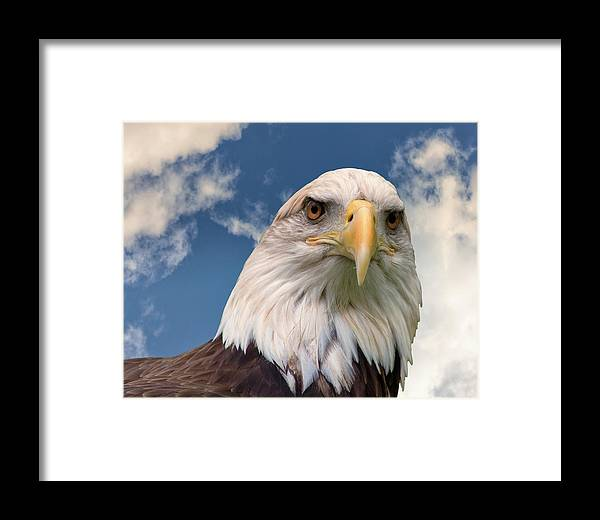 American Culture Framed Print featuring the photograph American Bald Eagle by Ken Wolter