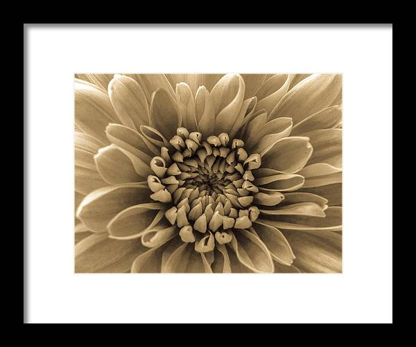 Brown Flower Framed Print featuring the photograph Brown Flower by Dawn OConnor