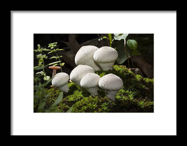 Musrooms Framed Print featuring the photograph Forest Life by Irv Freedman