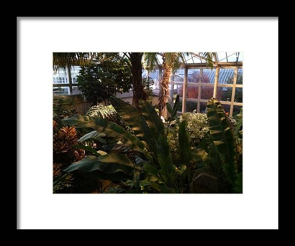 Plants Framed Print featuring the painting Franklin Park Conservatory by Jill Parsons