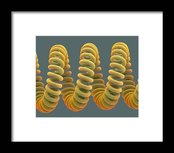Filament Framed Print featuring the photograph Light Bulb Filament, Sem by Steve Gschmeissner