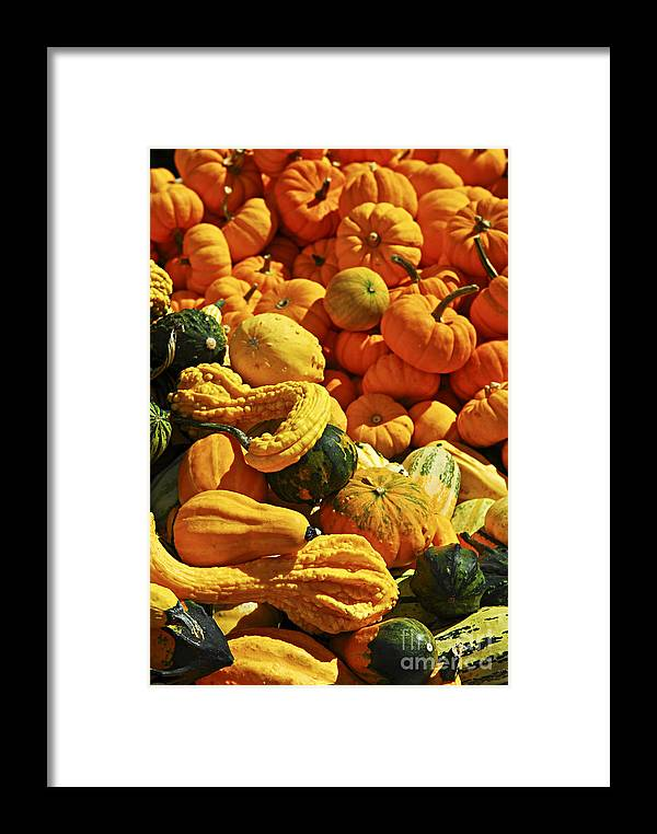 Pumpkin Framed Print featuring the photograph Pumpkins And Gourds by Elena Elisseeva
