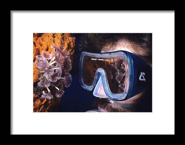 Bahamas Caribean Sea Islands Tropical Reef Rum Cay Underwater84 Framed Print featuring the photograph Reef Reflections by Don Kreuter