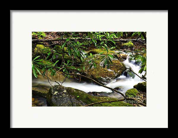 Rushing Mountain Stream Framed Print featuring the photograph Rhododendron And Waterfall by Thomas R Fletcher